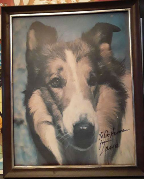 Image for Lassie Photo signed by Lassie